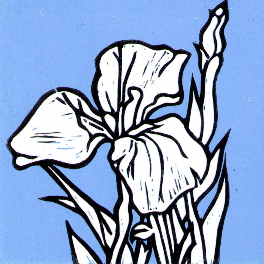 dwarf arctic iris lino 0315