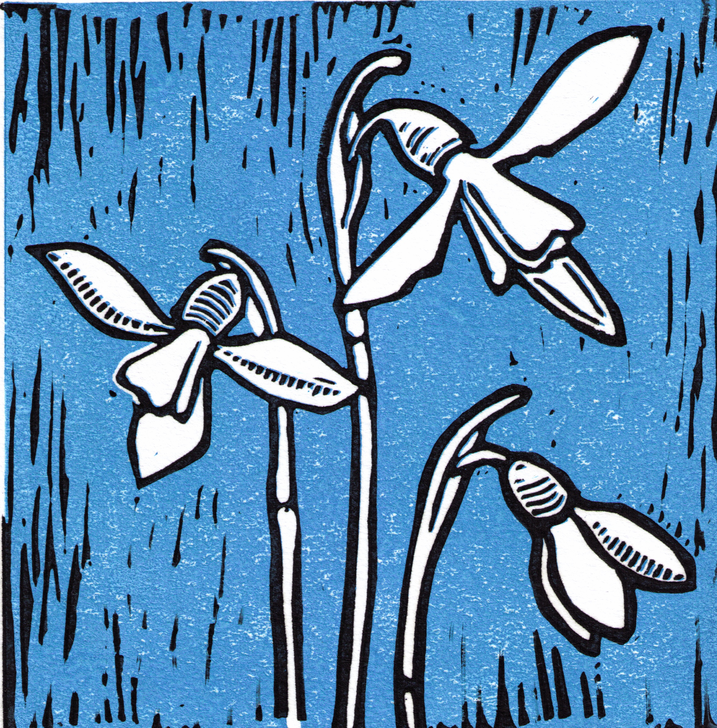 snowdrops-2-colour