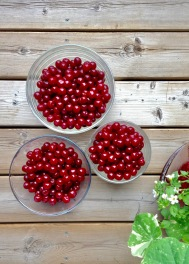 carmine-jewel-cherries