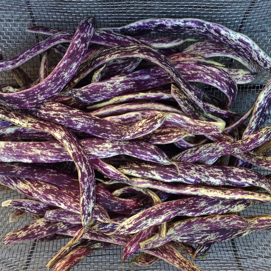 dragon-tongue-beans